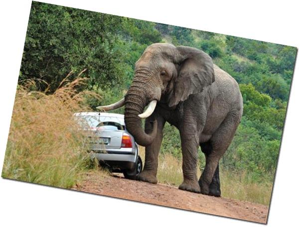 elephantroadrage4